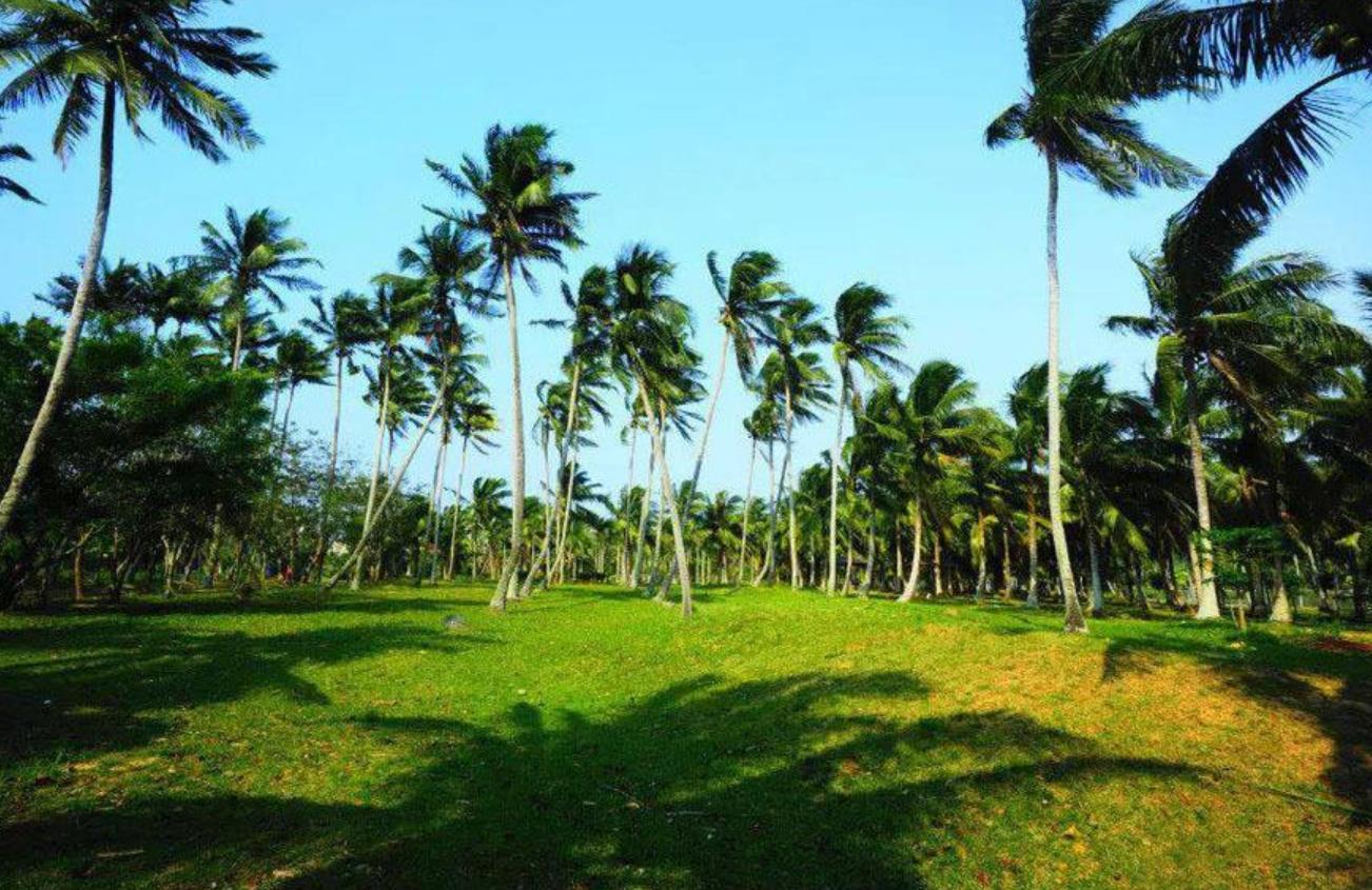 文昌椰子大观园