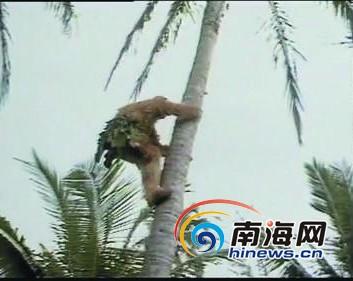 《西游记》中猴王爬上椰树的镜头
