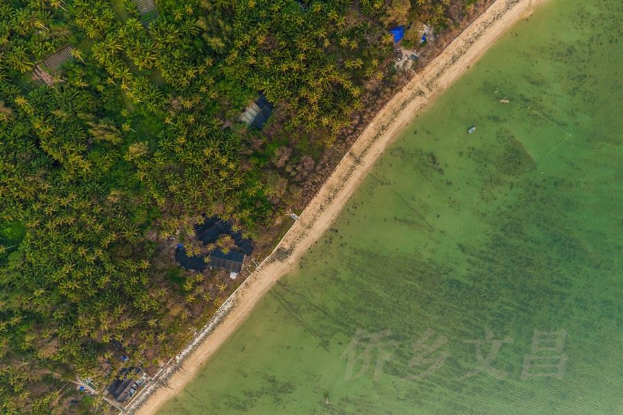 东郊椰林海岸线