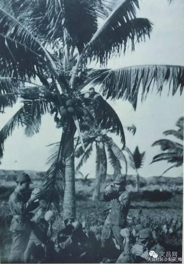 日本兵行军途中不忘偷摘椰子止渴