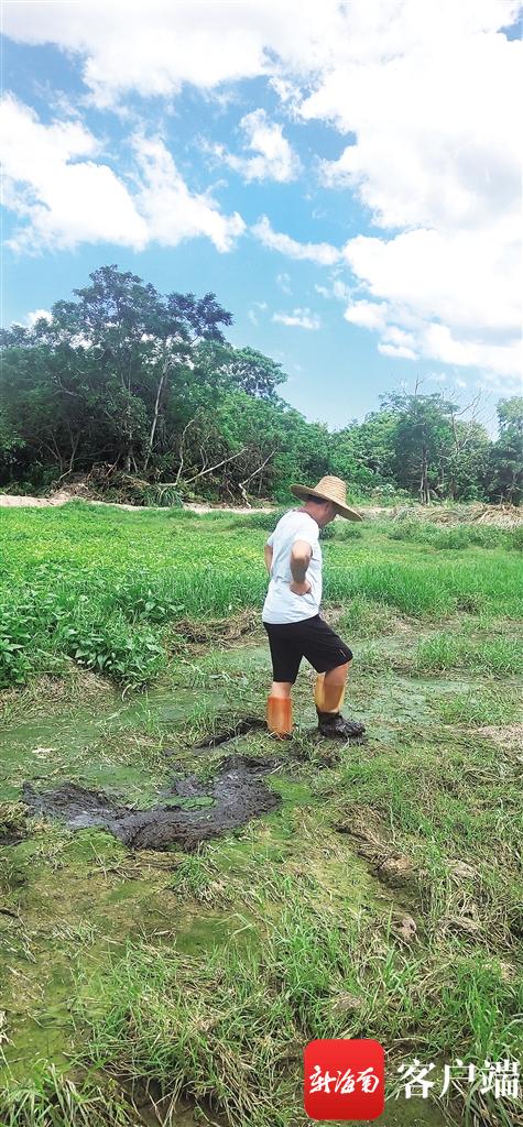 农田里沉积很多猪粪,一踩就会陷进去。
