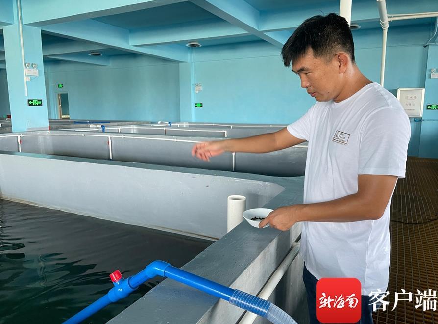 曾广能在厂房内饲养了东风螺、龙虾、东星斑等水产。记者 周静泊 摄