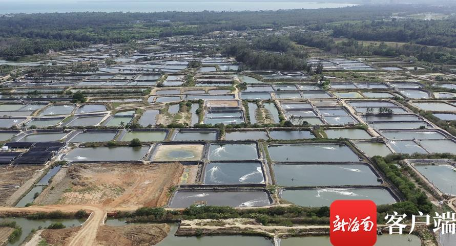 经过数十年的发展,冯家湾一带形成种苗、养殖、饲料生产、冷冻仓储、销售产业链,近海水产养殖成为当地传统支柱产业。记者 郑光平 摄